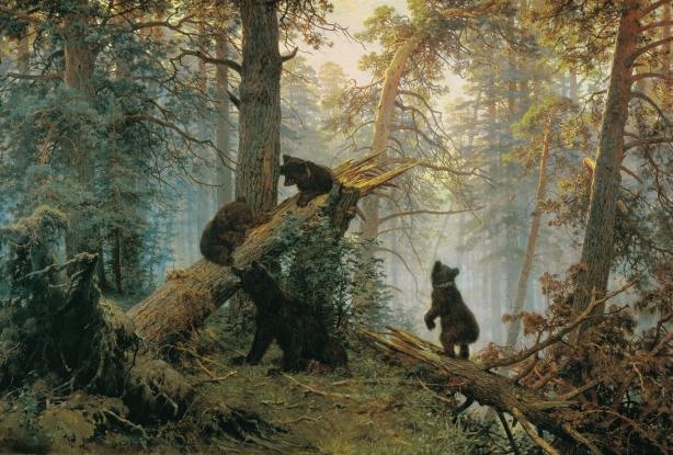 mañana en el bosque de pinos